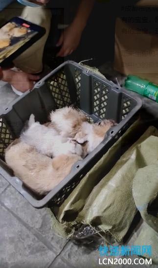 """啥都敢收?又是中通!13件""""宠物盲盒"""",动物全部死亡"""