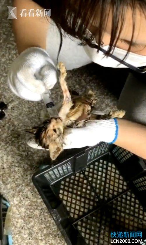 中通又摊上事儿了!苏州一中转站惊现数十只死亡宠物!
